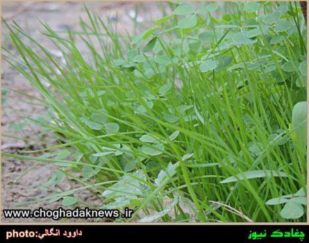 تصاویر پوشش گیاهی خاص و متنوع در شهر چغادک