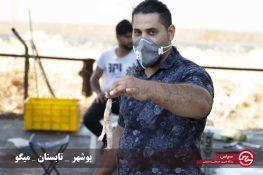 تصاویر آغاز فصل میگو در بوشهر