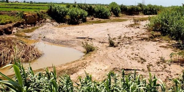 تمام غرامتهای سال زراعی ۹۹-۹۸ به کشاورزان بوشهری پرداخت شد