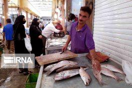 بازار ماهیفروشان بوشهر